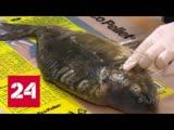 Ядовитый улов: чем рискуют любители платной рыбалки? - Россия 24 zljdbnsq ekjd: xtv hbcre.n k.,bntkb gkfnyjq hs,fkrb? - hjccbz 2