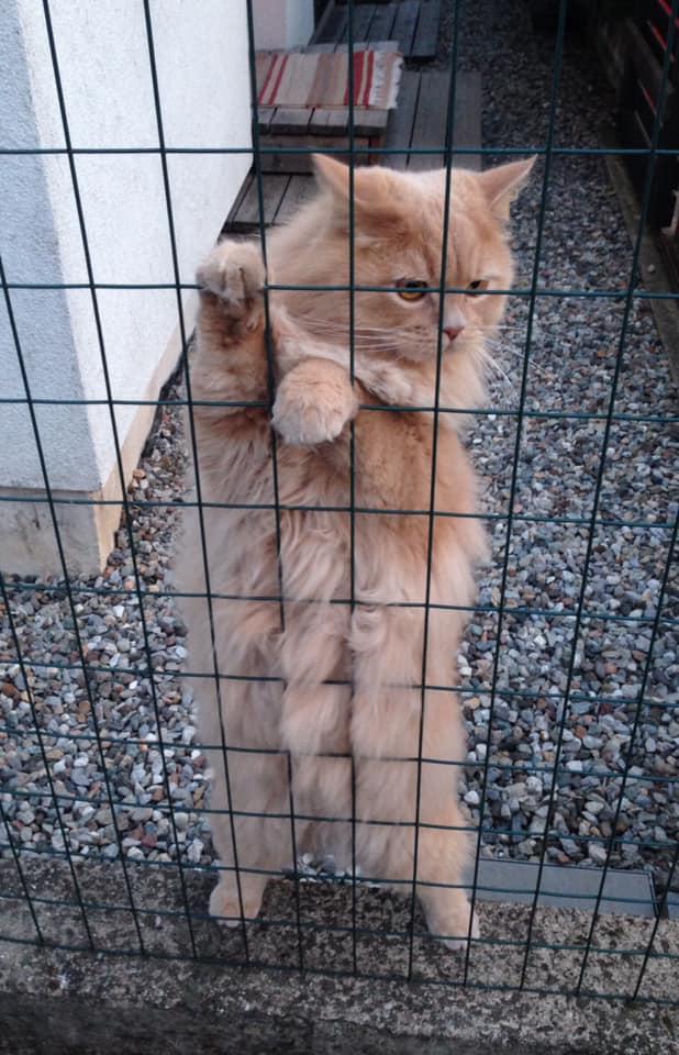 Смотри человек, у меня кубики на животе)))