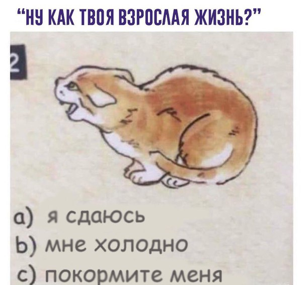 Фото №456340691 со страницы Лады Перфильевой