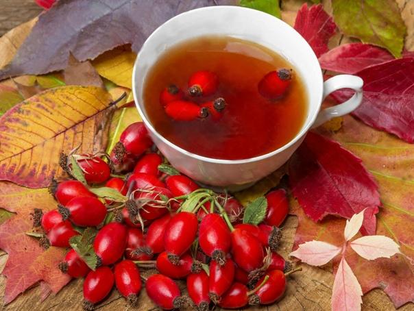 Чай из шиповника: польза и вред. Как заваривать чай с шиповником