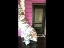 Dinosaur 🦖 Shuffle Dance
