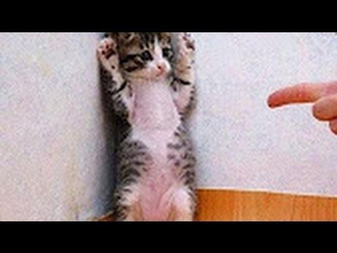 Những Chú Mèo Hài Hước Nhất Thế Giới Phần 1