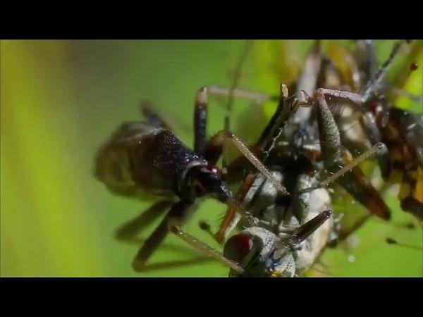 Растения хищники Документальный фильм national geographic nat geo wild discovery bbc