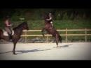 Мой клип про лошадей