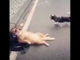 image_кот