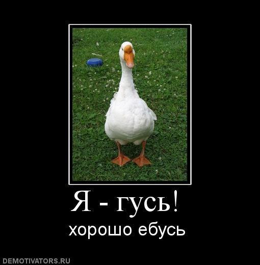 гусь картинки: