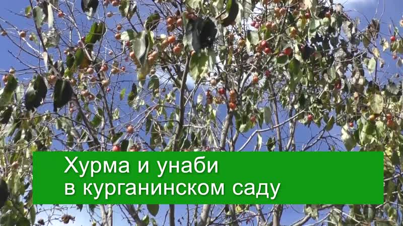 Курганинск. Золотая ноябрьская осень
