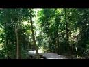 Через день хожу по джунглям гулять Около 5 км мой любимый маршрут