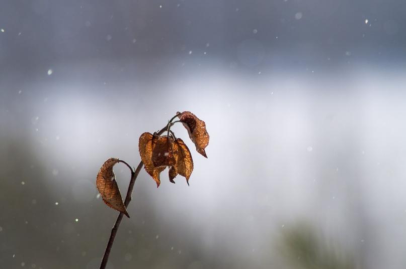 Свет, снег, листья.