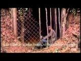 Lee DeWyze - Blackbird Song Subtitulada Espa
