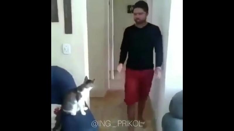 Друган котэ
