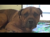 Dog cant stop crying after realizing hes been abandoned at the animal shelter