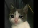 Sad cat hours
