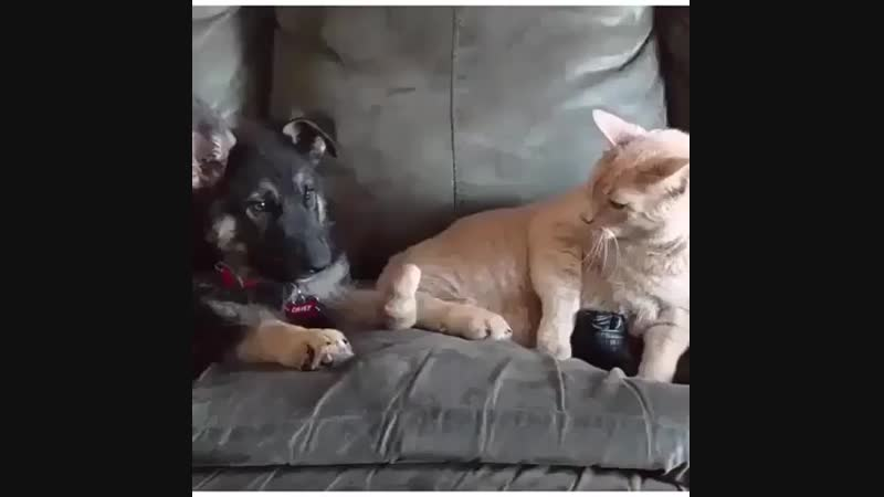 Кот провокатор😂