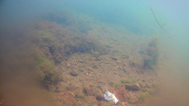 подводная съёмка ручей приток кочеяко тетры объедают трупик цихлиды