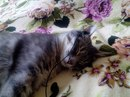 Гиляна Навашева фото #27