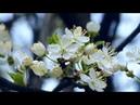 Весна! Какое счастье! Какая нежность!Мелодия для души!