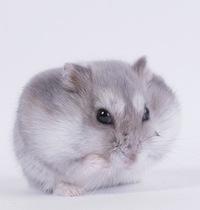 Hamster Jungary, 11 июля , Гродно, id204994883