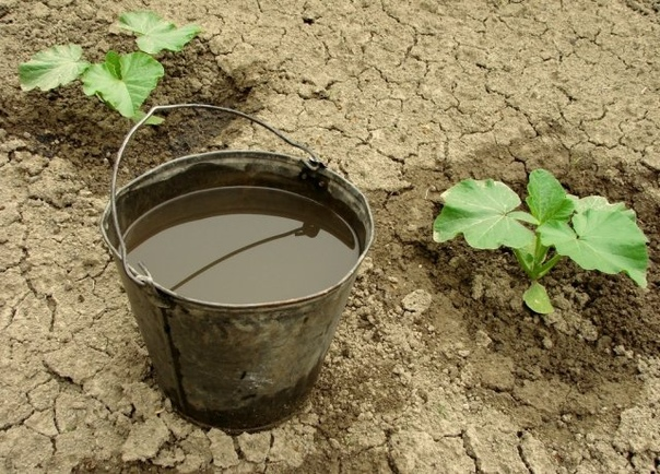 Гуминовые удобрения что это такое и как они помогают увеличивать урожай. Что такое гуминовые удобрения и как их применять, к сожалению, знают далеко не все огородники. Однако, получив ответы на