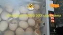 Инкубация яиц КОББ 500 завершена Результаты
