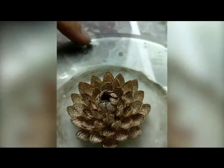 Most diamonds on a ring - Guinness World Records.mp4