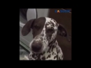 Пятилетняя собака Джессика выговорила имя своего хозяина в Волжском