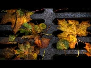 """Natalie cole – """"autumn leaves"""" ( joseph kosma, jacques prévert)"""
