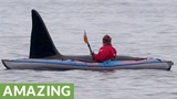 Curious killer whale literally swims beside man in kayak