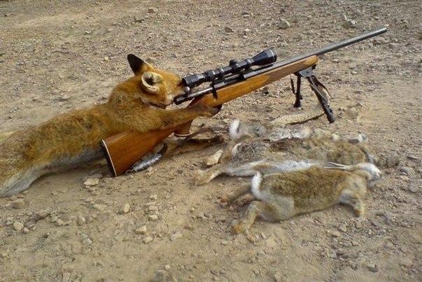 тут зайцев нет: