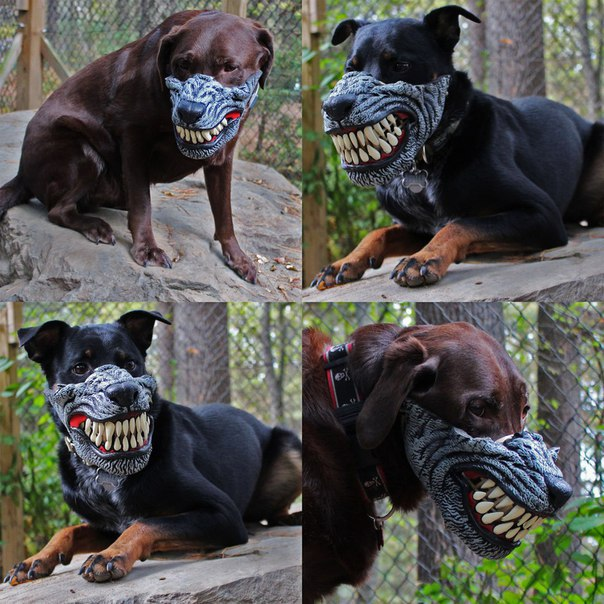 Лютый собачий намордник Werewolf Dog Muzzle