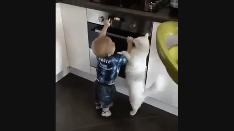 Когда коту можно доверить воспитание ребёнка