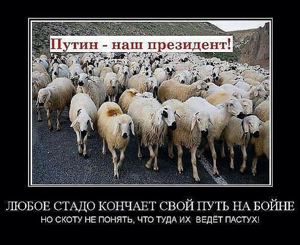 49% россиян уверены, что Запад закроет глаза на Крым и Донбасс и возобновит отношения с РФ, - опрос - Цензор.НЕТ 2104