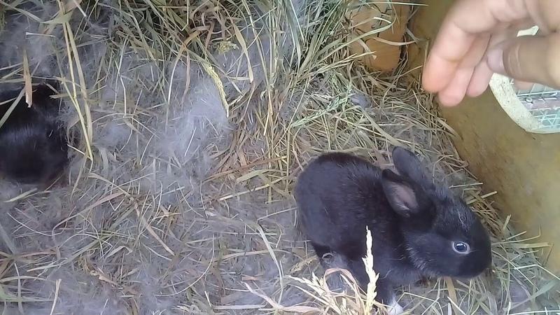 Борзый кролик смотреть всем. Прикол.