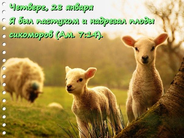 Исследуем Писания каждый день 2016 7UmDlwLEmF8