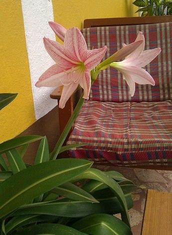 Цветы под окнами
