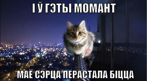 http://cs608816.vk.me/v608816542/fc8a/gMKrkHFUxVI.jpg