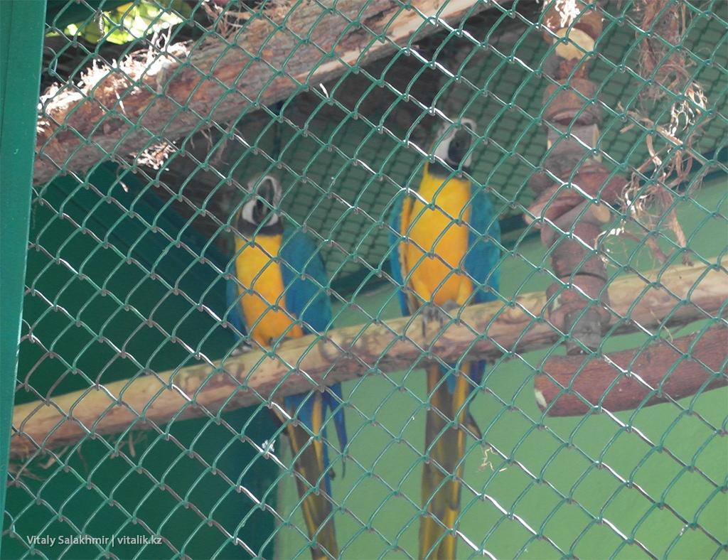 Попугаи в зоопарке Алматы 2018