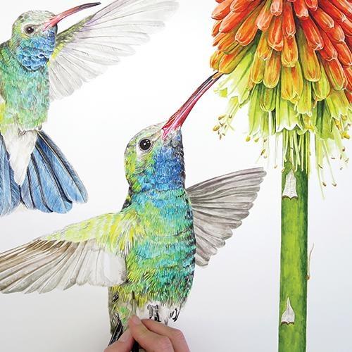 Рисуем реалистичных колибри
