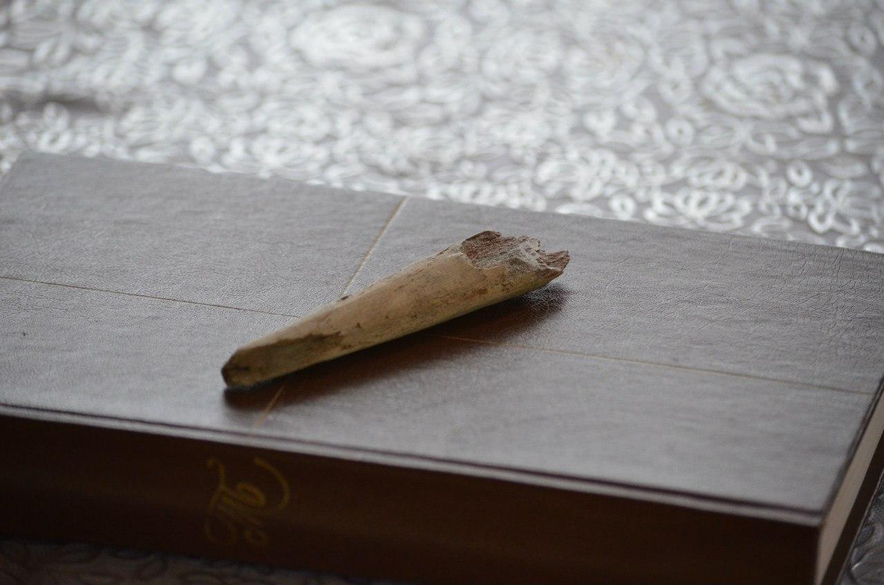 находка, фрагмент костяной иглы (06.11.2014)