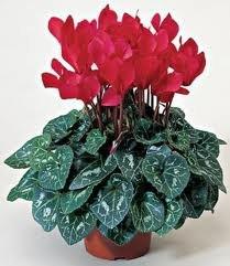 чернаямагия - Магия растений. Магические свойства растений. Обряды и ритуалы. Амулеты и талисманы из растений.  MAievKRoqZM