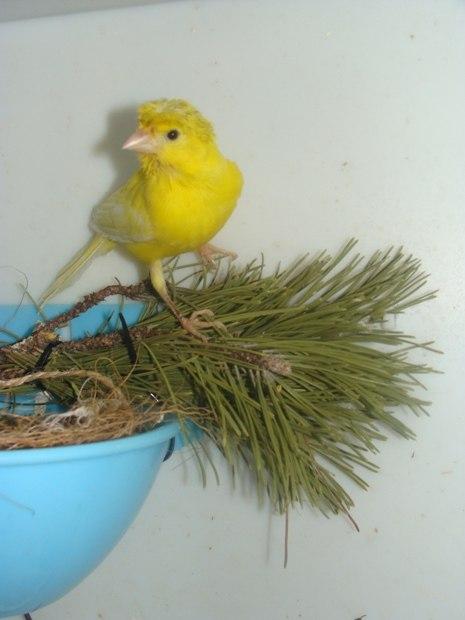 """Фотографии """"птичей комнаты""""  - Страница 2 E-k3lDh4hWg"""