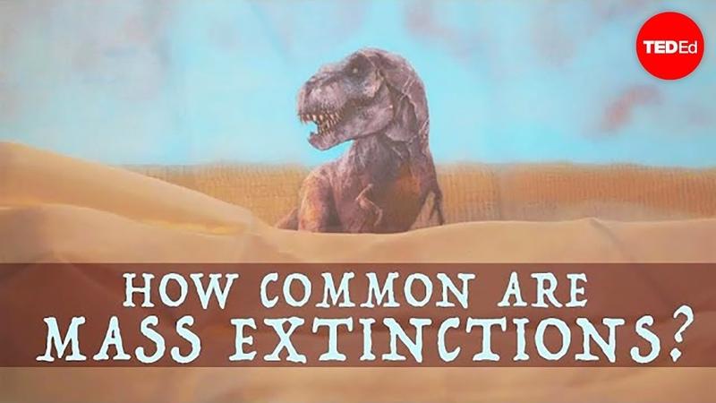 When will the next mass extinction occur Borths D