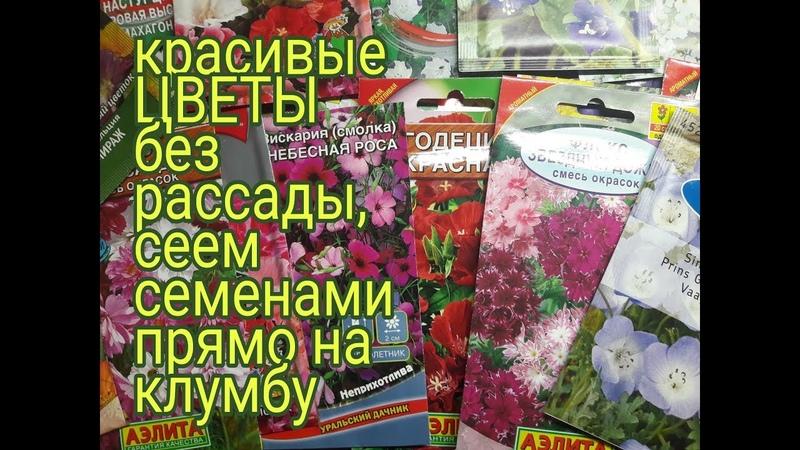 САМЫЕ КРАСИВЫЕ ЦВЕТЫ БЕЗ РАССАДЫ ДЛЯ ЛЕНИВЫХ какие цветы посеять семенами прямо на клумбу