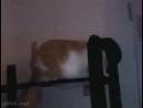 Смирись, ты никогда не будешь таким же крутым как этот кот!