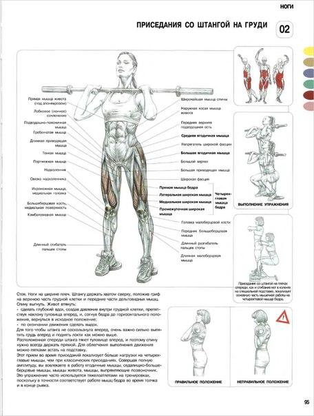 Схема мышц и упражнений