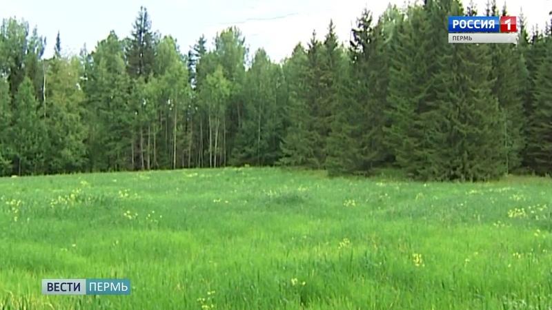 В Горнозаводском районе в лесу потерялся 12-летний мальчик