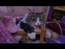 Как уложить кошку спать/Ручная кошка/Приколы с котами