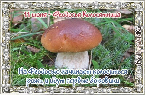 https://pp.userapi.com/c7003/v7003438/1eaa0/n7yaUFnb6Ko.jpg