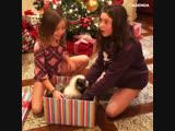 Самый неожиданный подарок на Новый Год
