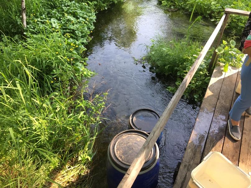 Отчет Камчатка. В ручье водится рыба